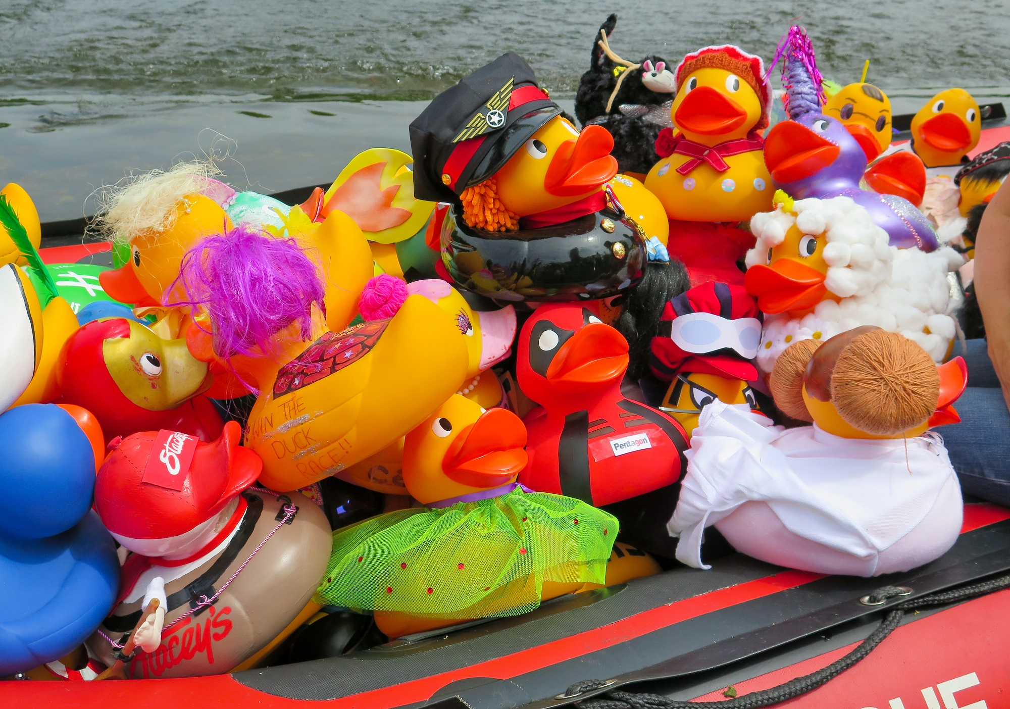 Image showing ducks ready for duck race 2018