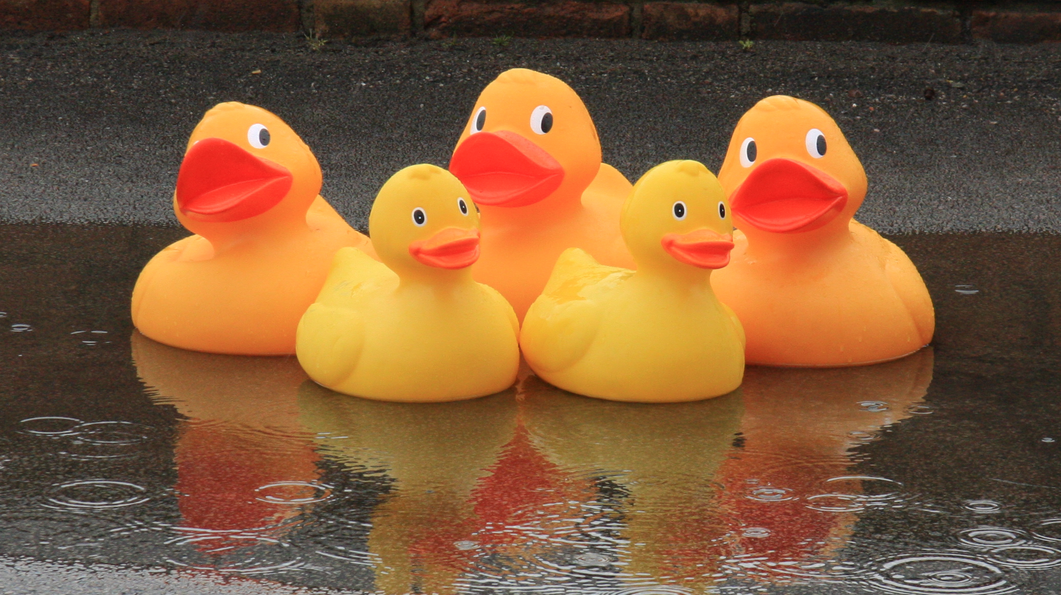Five large plastic ducks sitting in a puddle